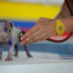 Is it possible to get everything our pet needs on the Internet?